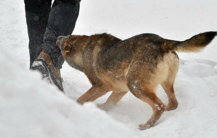 ЗОНА охоты СОБАК или пробежка в окрестностях Озерска